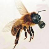 Cientistas descobrem o que está matando as abelhas, e é mais grave do que se pensava