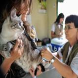 Pet shops terão de manter veterinário para inspeções de animais