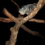 Visita noturna ao Zoo está com inscrição aberta até 1/4