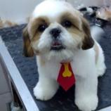 Pet Shop Pop Dog