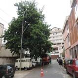 Moradores impedem supressão de árvore em Santa Tereza