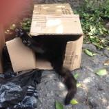 Gatos envenenados em Santa Tereza