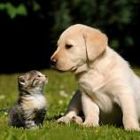 Atendimento veterinário domiciliar