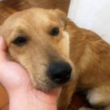 Cãozinho dócil perdido em Santê