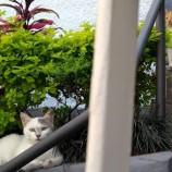 Assassinatos de gatos no Dia dos Animais